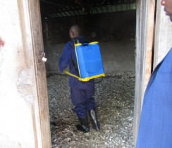 Inmate Implementing Training In The Poultry Farm At The Mbengwi Principal Prison 2